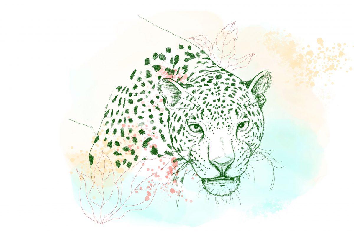 Sb Website Illustration Jaguar 201202 Final